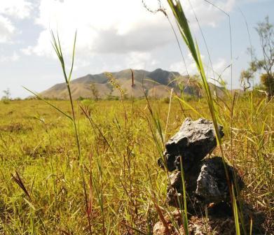 Gunung Kerbau Pulau Moa, Kabupaten Maluku Barat Daya