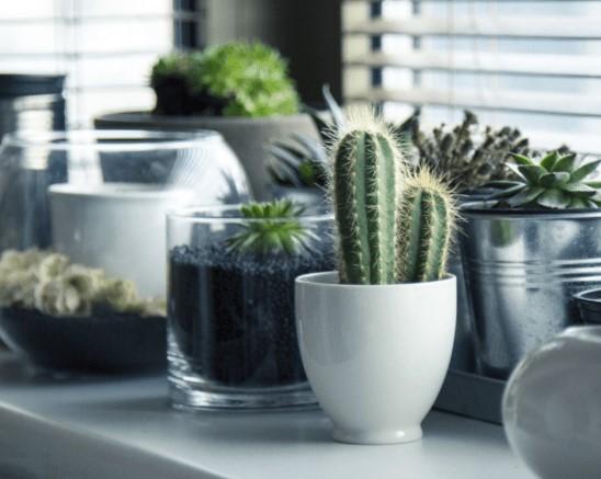 Dekorasi tanaman mungil dalam pot menyemarakkan jendela kamar kamu
