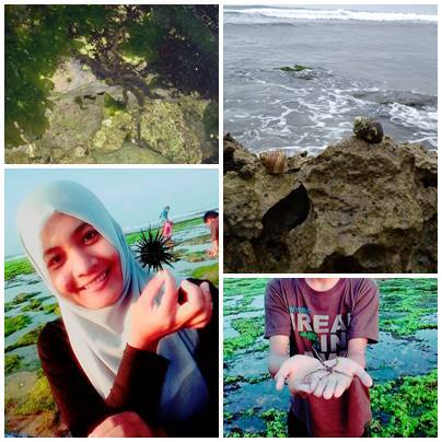 Berburu Biota Laut