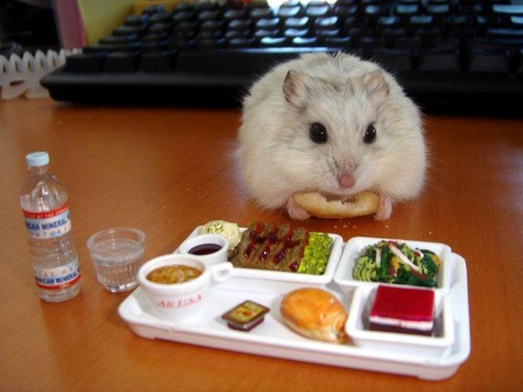 harus pintar-pintar pilih makanan