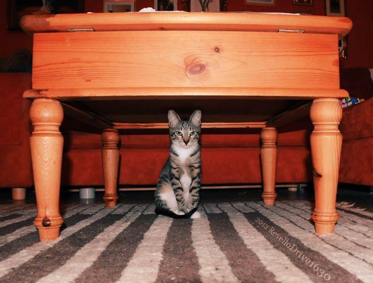 Muncul di bawah meja
