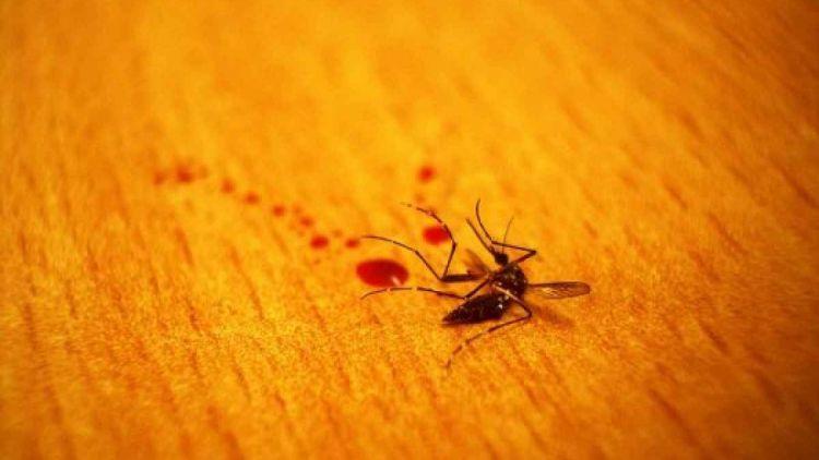 10 cara jitu buat mengusir nyamuk dari