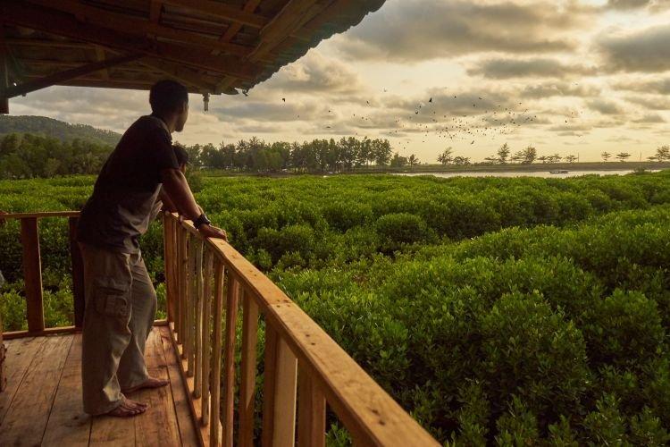 Mangrove Logending
