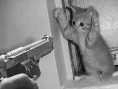 biar nggak ada kucing nakal lagi di rumahmu