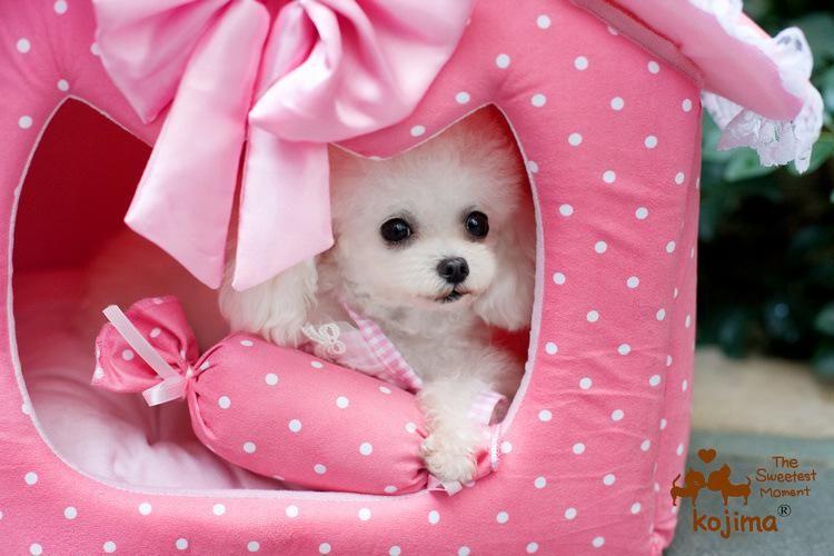 Biar Anjingmu Nggak Kedinginan Rumah Ini Countuknya Kalau Pink Begini Sih Harusnya Dia Betina