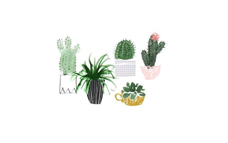 Kaktus hijau