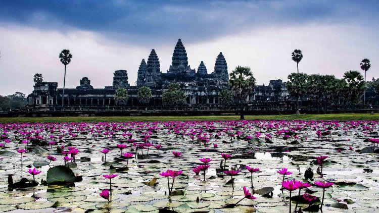 Puluhan ribu candi Budha tersebar. View dari bunga lili yang bermekaran.
