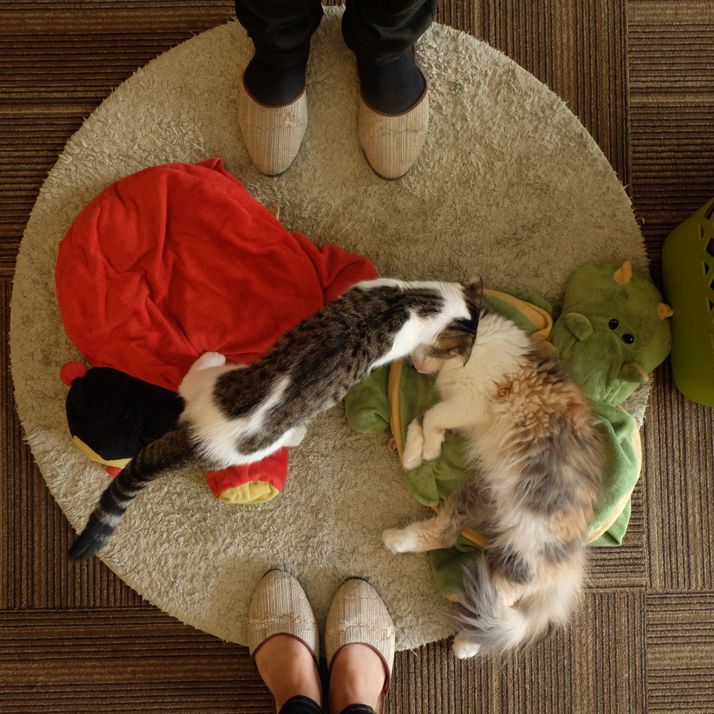 Cutie_Cats_Cafe