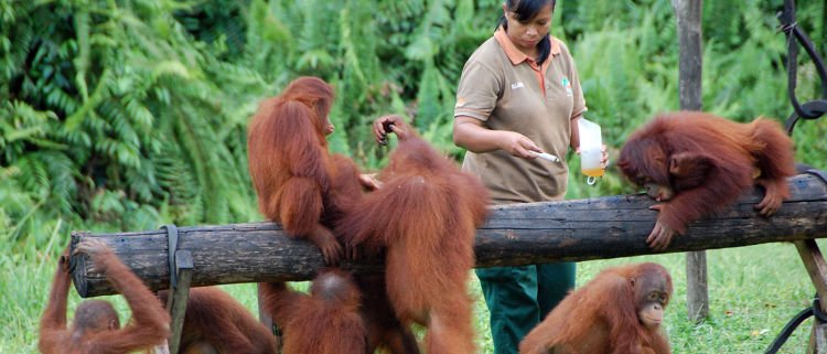 Program-Reintroduksi-Kalimantan-Tengah-1400x600
