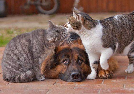 percintaan kucing nggak pernah ada rumit-rumitnya