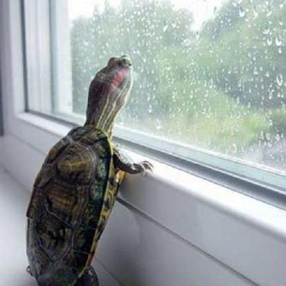 hujan mulu, kapan aku pulangnya?