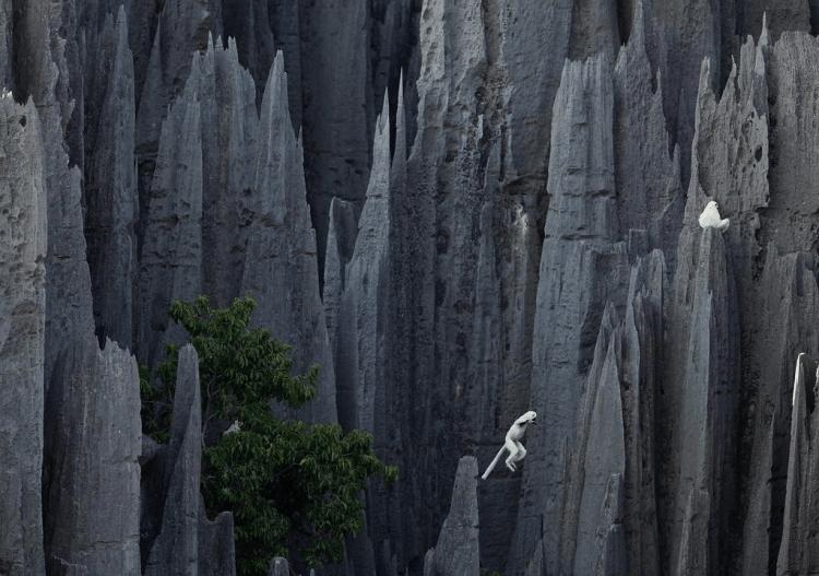 Hutan batu yang mengagumkan. Cuma ada di Madagaskar.