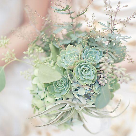 Dari succulent