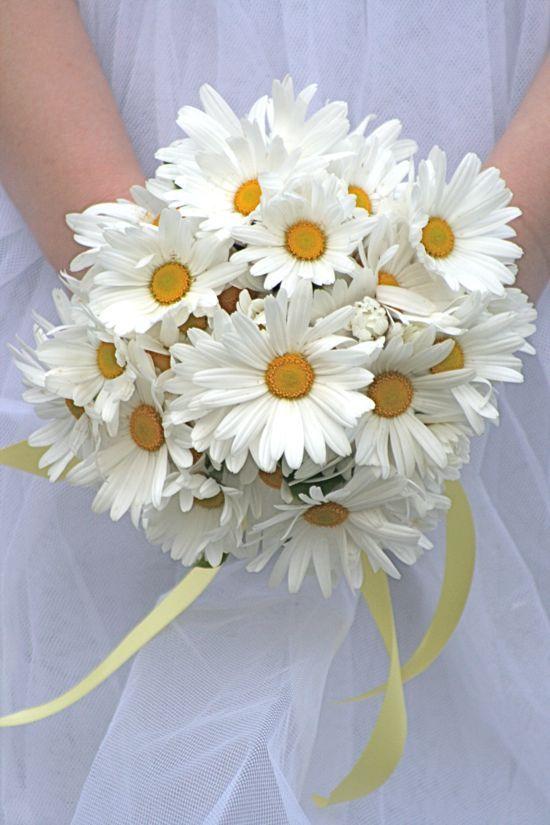 Bunga daisy putih~