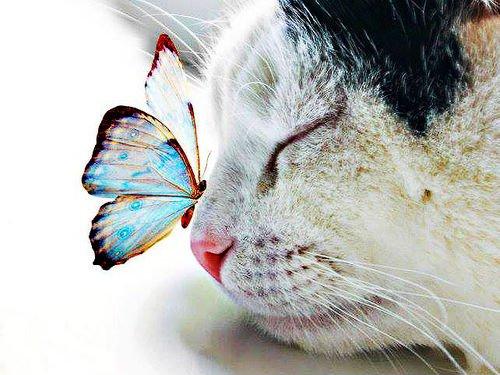 65904-Butterfly-On-Cat
