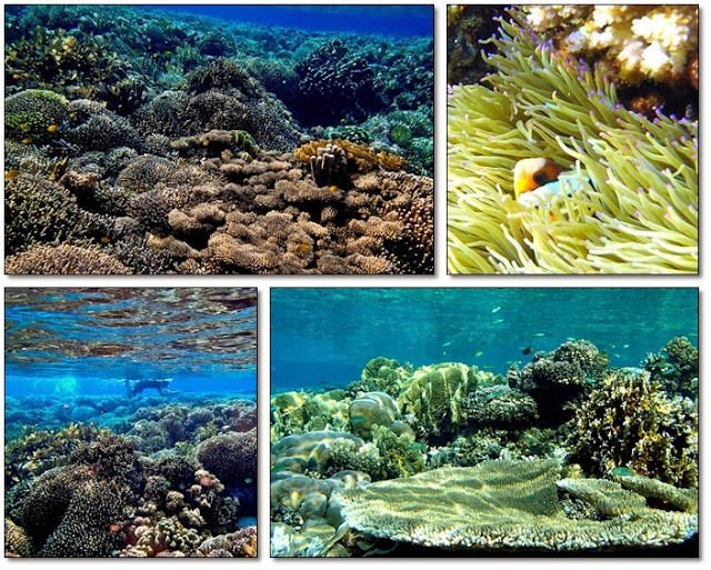 Keindahan Bawah Laut Tinalapu
