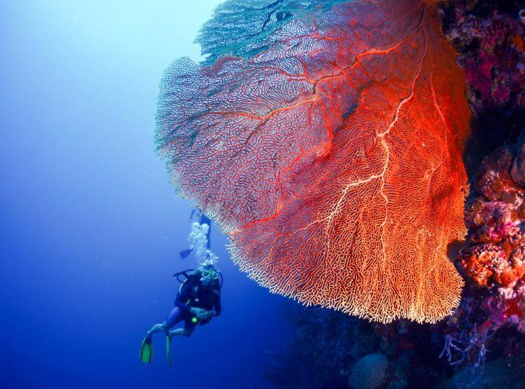 Scuba diving at Menjangan Island. Mau?