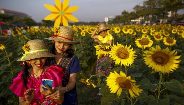selfie bersama bunga matahari