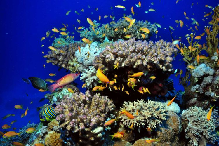 Biota laut di Pulau Menjangan.
