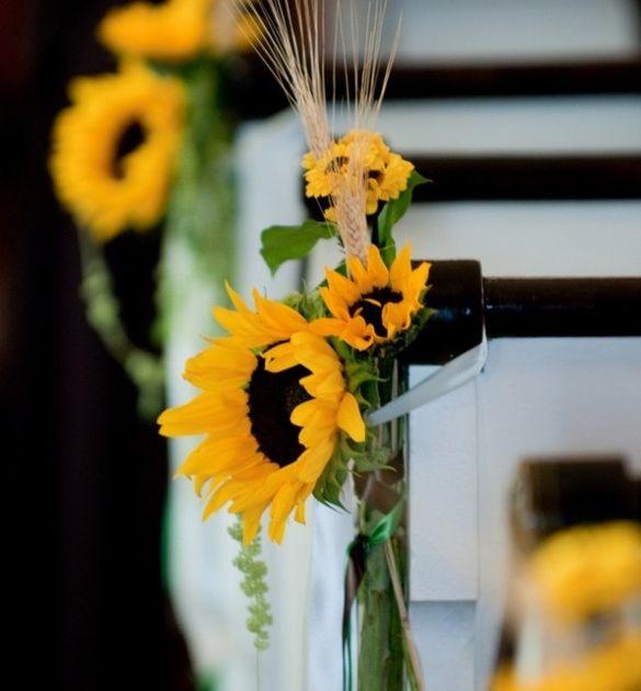 Nggak Cuma Hamtaro Yang Suka Biji Bunga Matahari Konsep