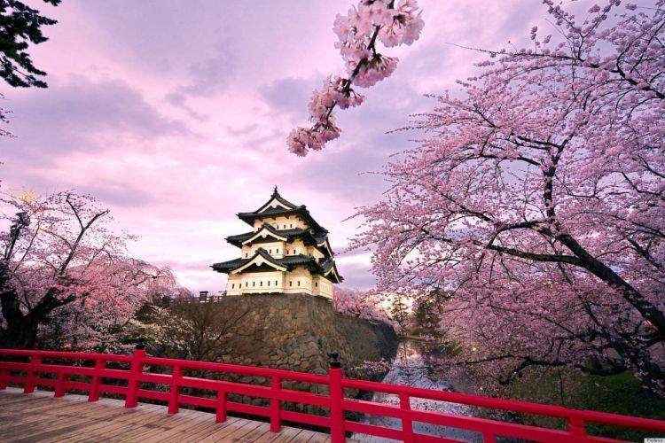 sakura nan indah
