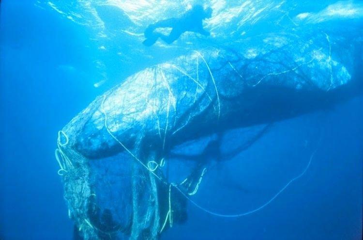 Terjerat sampah plastik. :(