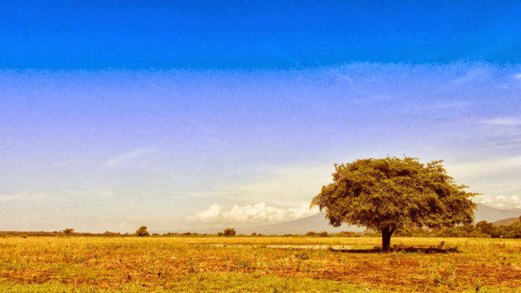 The Lonely Tree, lansekap khas Taman Nasional Baluran