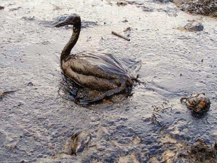 Berlumur minyak. :(
