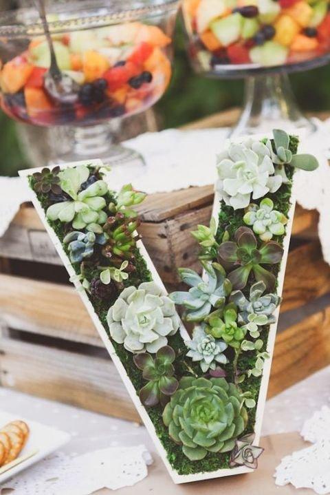Diisi dengan tanaman succulent makin aduhai