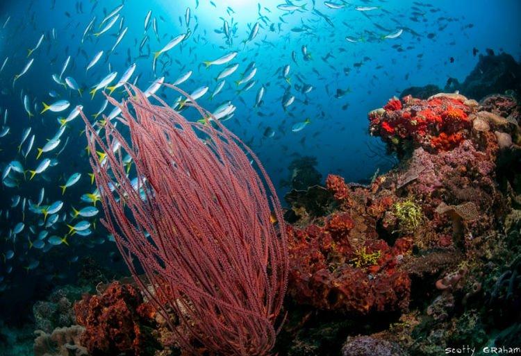 Biota laut pulau