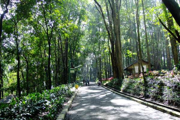 Hutan Jombang di Ciputat
