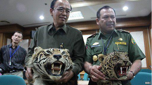 Kulit harimau dan macan tutul diperdagangkan via online.