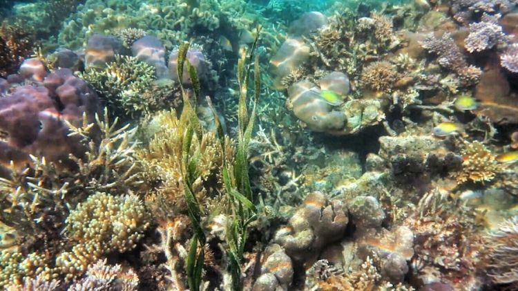 warna warni koralnya~