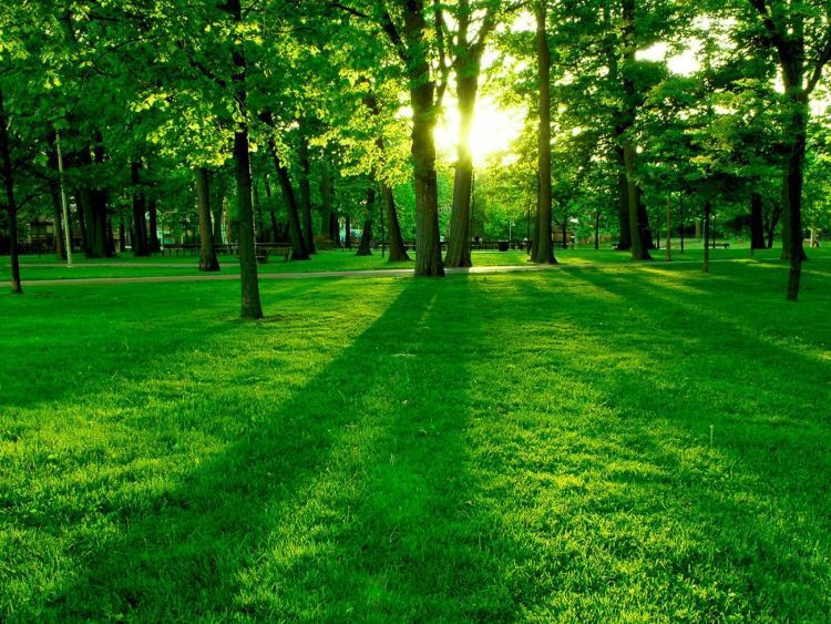 pemandangan hijau membantu mata rileks