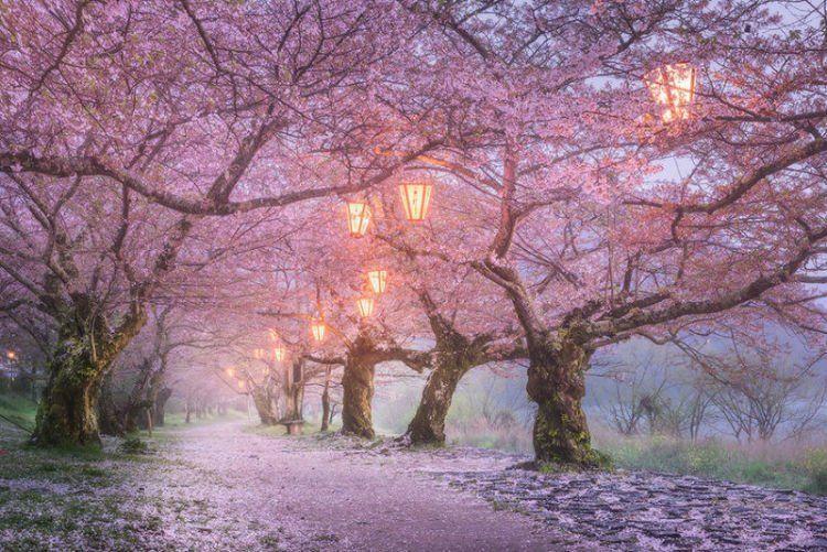 25 Potret Keindahan Negeri Sakura Jepang Yang Bikin Nggak Bisa