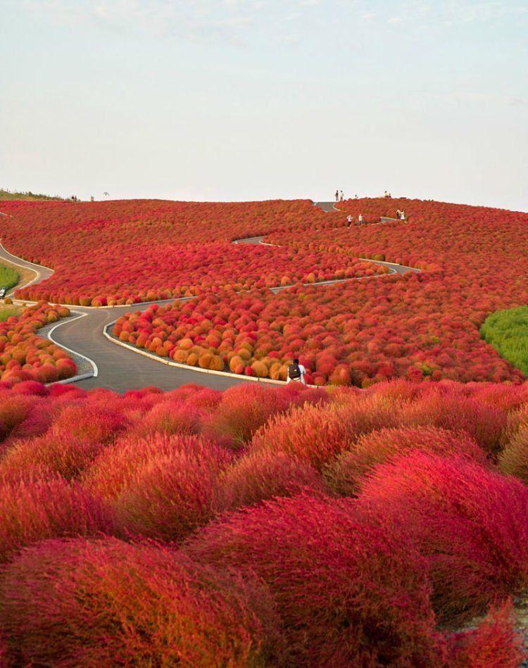 Warna merahnya tajam