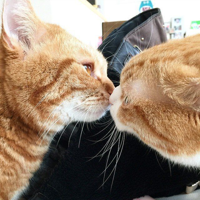 Unduh 100+  Gambar Kucing Pelukan Terbaik