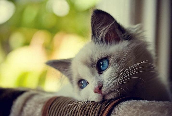 9700 Koleksi Gambar Hewan Kucing Lucu Gratis Terbaik