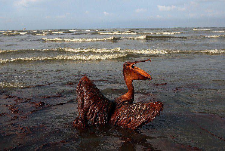 burung dan terbang bukankah sesuatu yang identik? kalau sudah nggak bisa terbang, buat apa pelikan ini hidup :(
