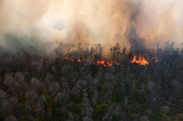 Kebakaran hutan menjadi penyebab munculnya asap.