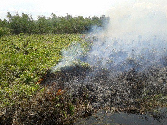 Api dari pembakaran gambut ini bisa bertahan hingga berminggu-minggu. Gimana asapnya coba?