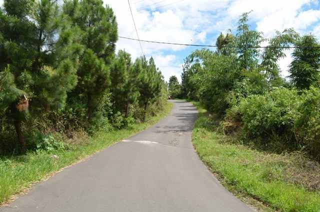 Jalanan yang serba hijau