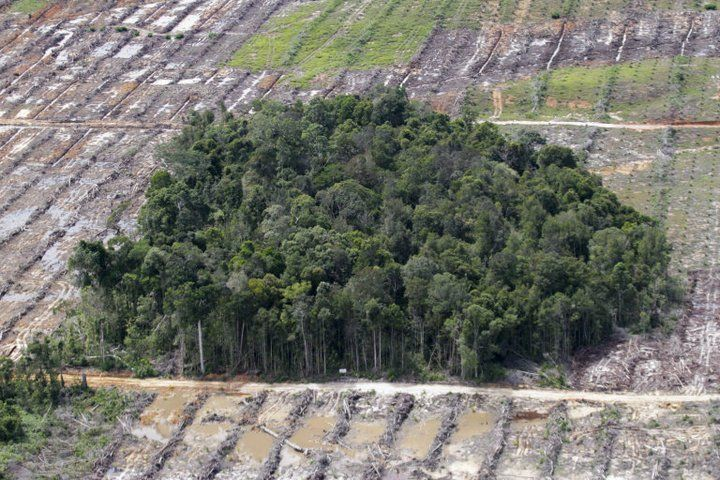 Wajah hutan Indonesia...