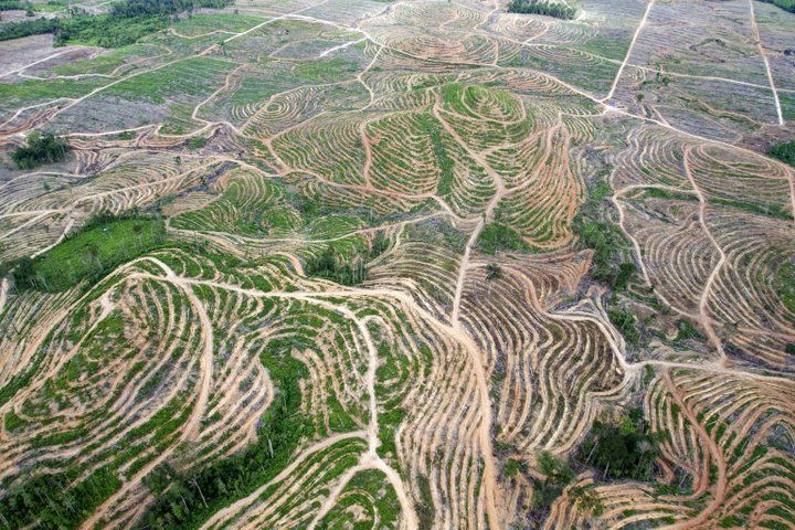 Pabrik tisu, furniture kayu, dan kebutuhan kayu lainnya, menjadi salah satu faktor kenapa hutan semakin menipis saja luasnya!