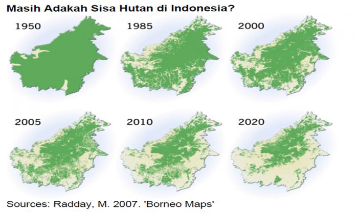 Kebakaran hutan yang disengaja menjadi salah satu penyebab makin berkurangnya luas hutan di Indonesia.