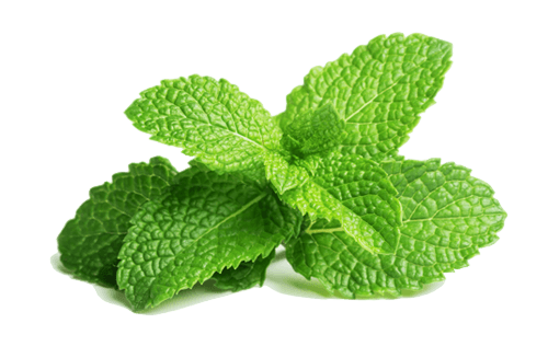 wangi mint segar via healthplus.vn