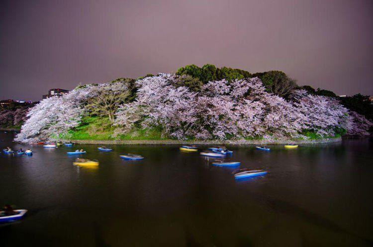 Chidorigafuchi ini terbuat dari apa ya? atau sakura yang terbuat dari apa? ahhhh