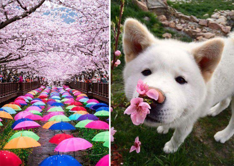 jadi pengen nanem sakura di depan rumah -_-