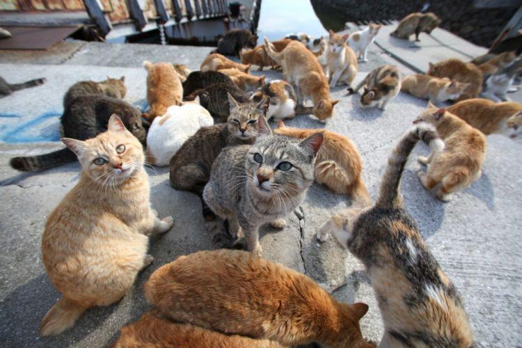 Cat lovers, yakin nggak mau ke sini?