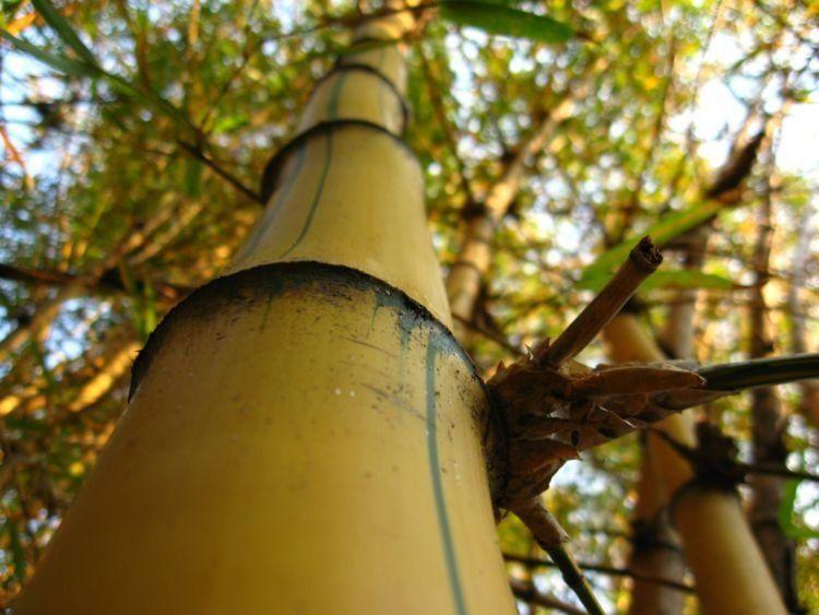 Gimana coba ya pake bambu